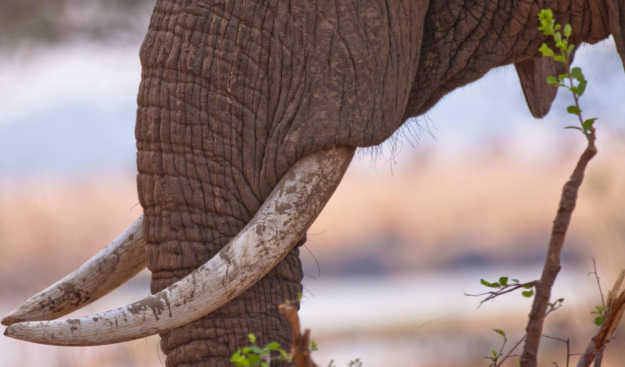 Zimbabwe Visitor FAQ's